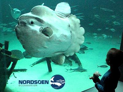 Nordsø Oceanarium (75km)
