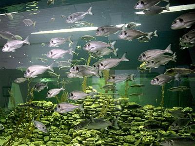 Nordsø Akvariet