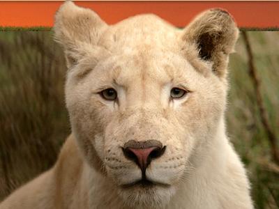 Blåvand Zoo