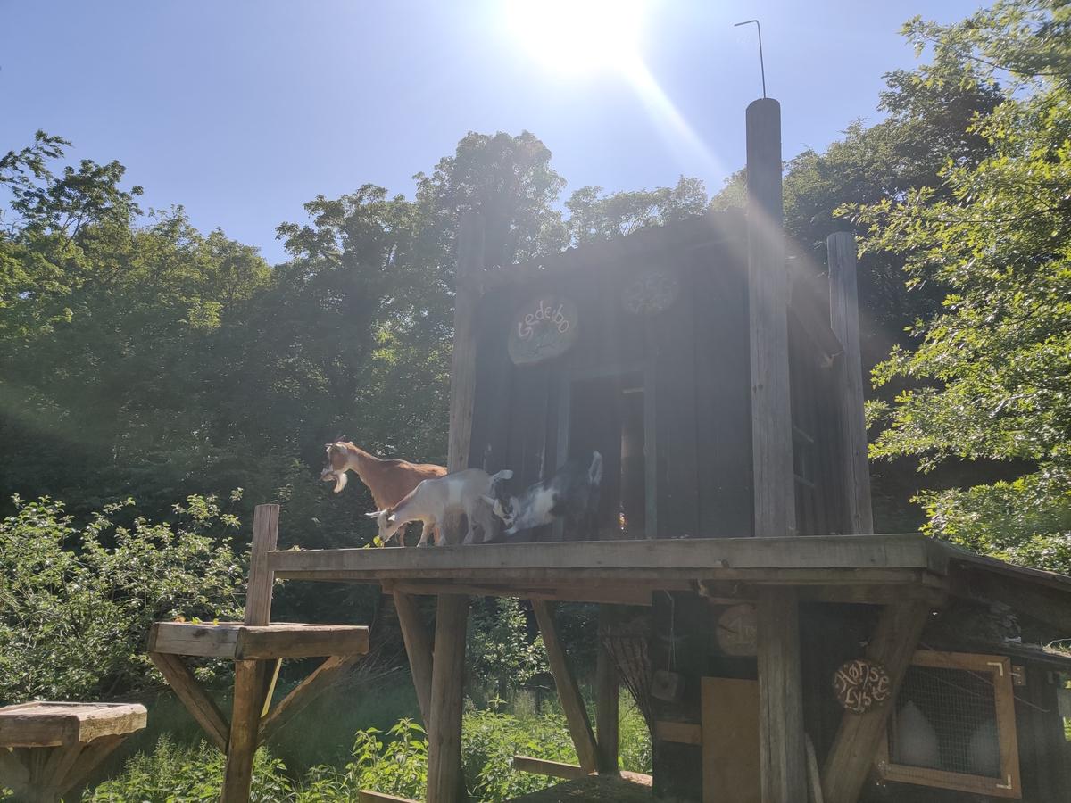Sommerhus 36